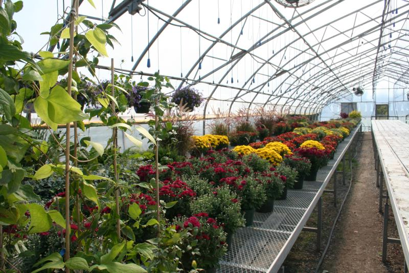 Wide range of Greenhouse products